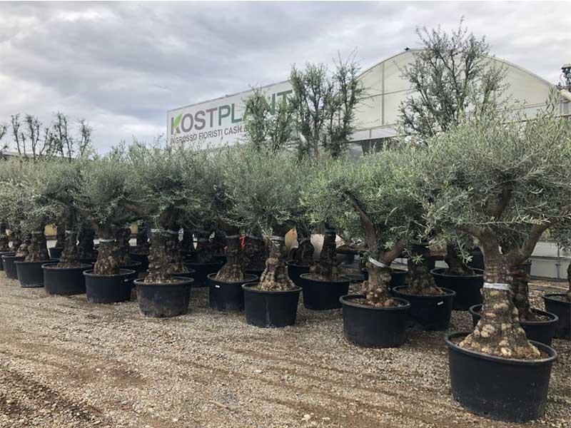 Forniture per Giardinieri all'ingrosso